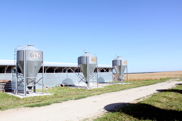 "Feed is held in individual storage containers called feed bins outside of barns. Some Kansas farmers are ""land-based,"" meaning they can grow much of the feed for hogs on their farm."
